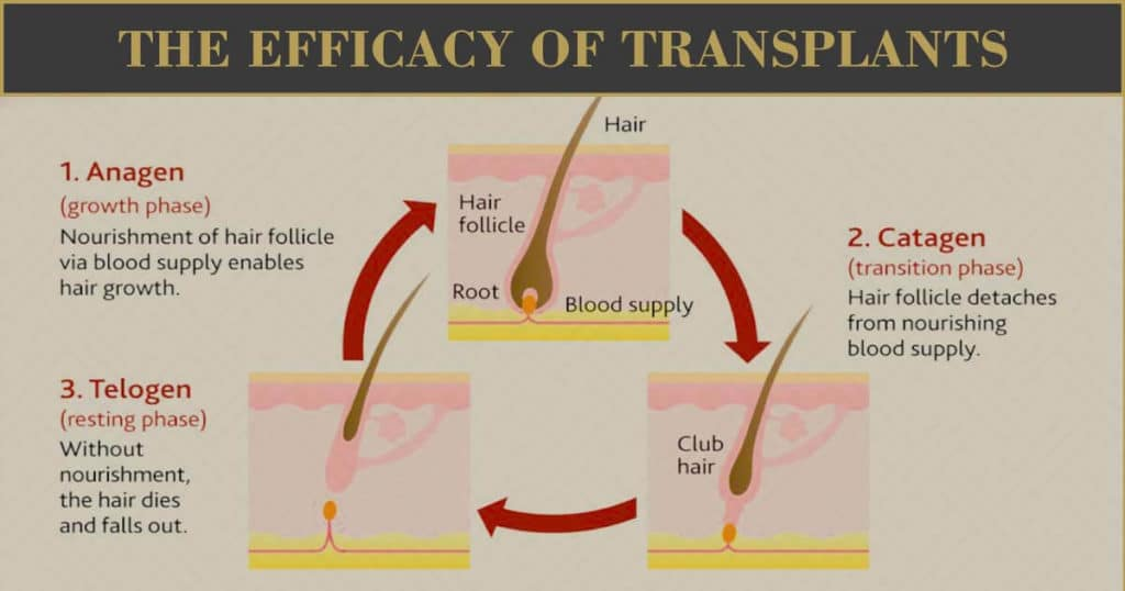 The Efficacy of Transplants